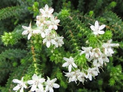 Daftar Herbal Penyembuh Ajaib Tapi Jarang Digunakan